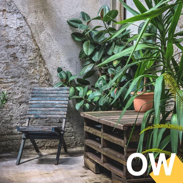INTERIOR o EXTERIOR ¡Tú eliges! Old Workshop, un espacio que conserva su look decadente original, tanto dentro como fuera para trabajar en un espacio único, ya sea para tu sesión, rodaje o para tener un espacio de producción.⁠ ⁠ #oldworkshop #shooting #set #interiorismo #barcelona #shootestudios #production #location #bcnlocations #openspaces #barcelonaestudios  #newdecor #decoration  #productionset #rodaje #fotografia #eixample #photographicstudio #picoftheday #food #exteriores #plantas