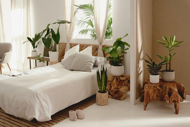 Ya es viernes y alguno puede que se le peguen las sábanas. @aprilplants.es ha montado una habitación llena de color en el Nü Apartment. ¿A vosotros os gustan las plantas?🌱  #feelshoot #nuapartment #shootestudios #bcnlocations #barcelonaestudios #decoration #set #productionset #rodaje #eixample #habitación #cama #plantas #verde #luz #luznatural #iluminacion #madera #sabanas